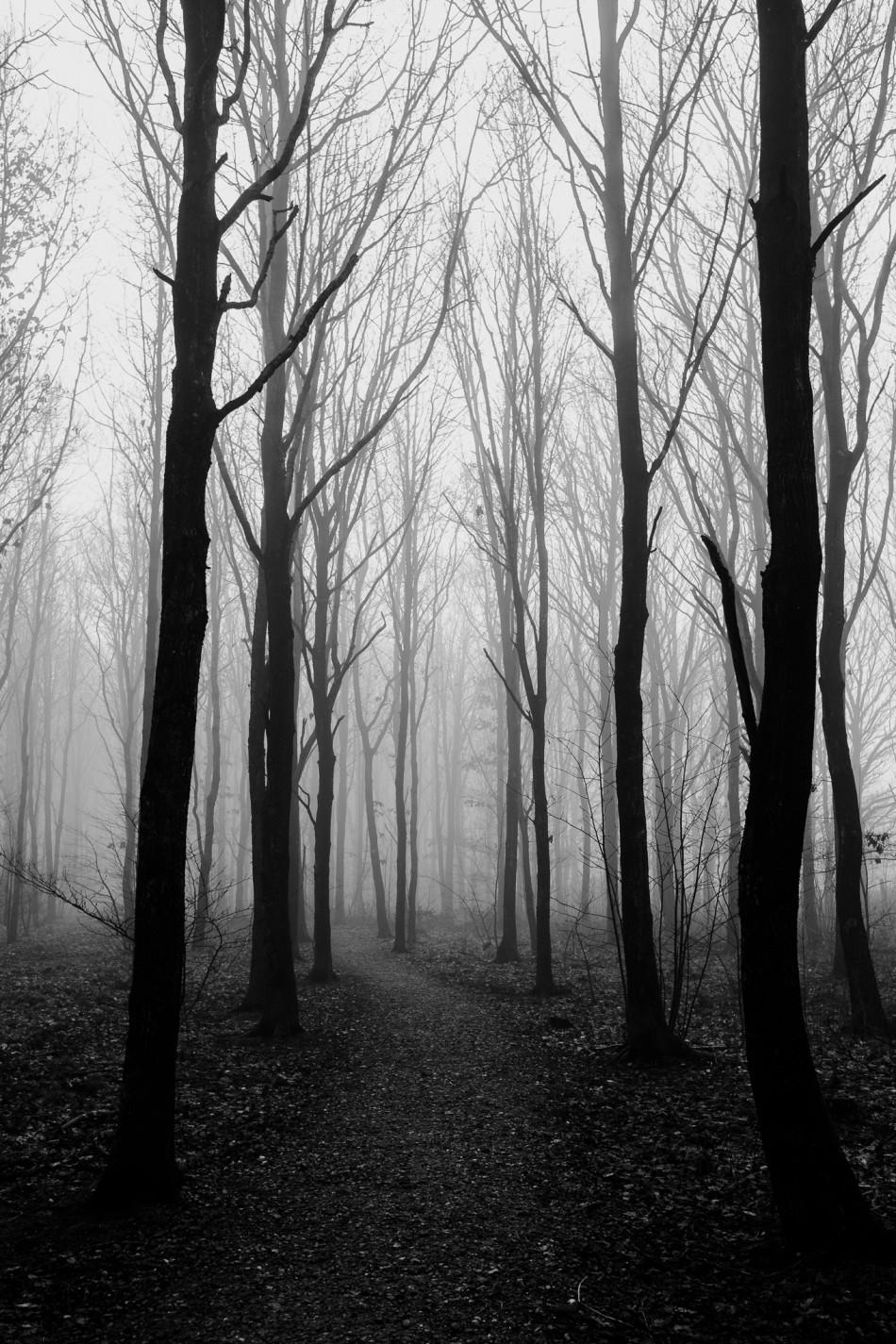 Billede af skov i tåge ved Knudmose i Herning