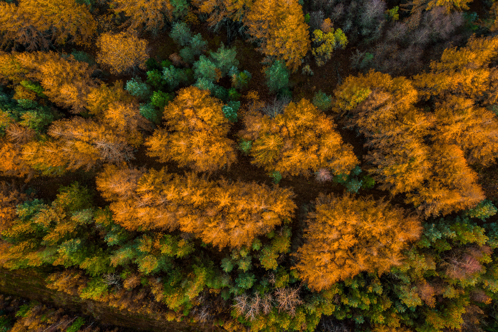 Fotograf - Herning - Efterårs farver